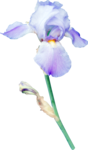 MRD_Promises_purple flower1.png