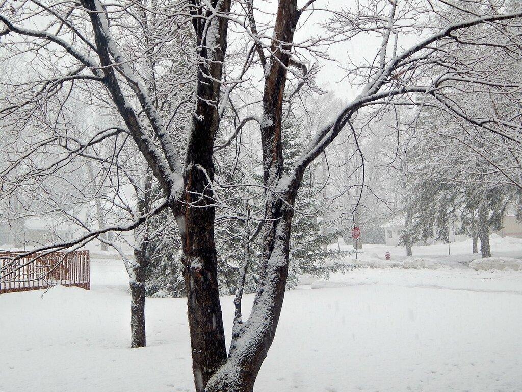 Зима-весна-2014.