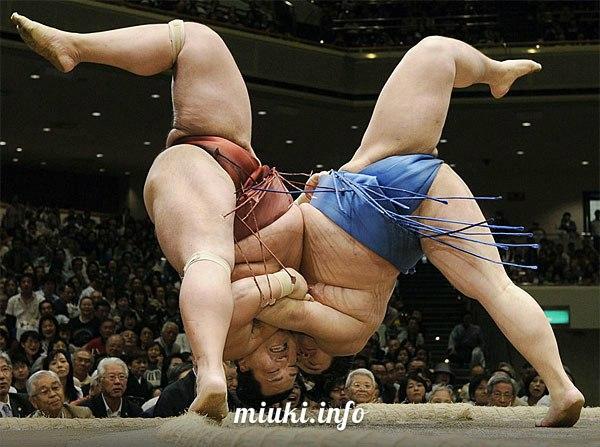 Что такое сумо (краткий словарь сумо)