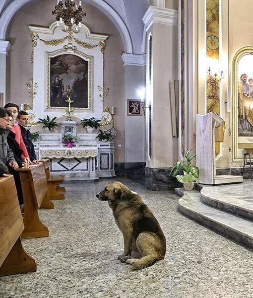 Собака ежедневно приходит в церковь и ждет умершую хозяйку