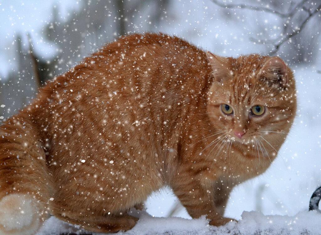 Что это-снег?