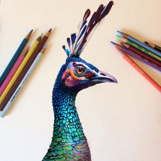 Lindas ilustracoes por Morgan Davidson