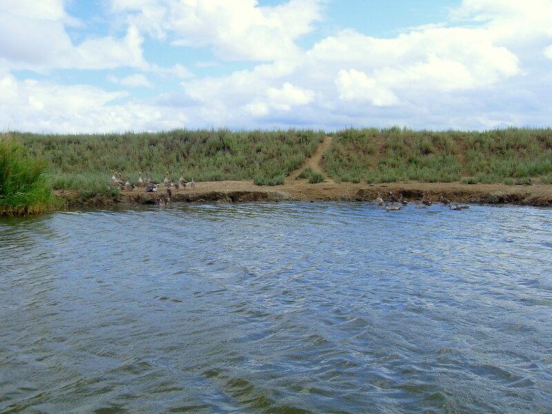 На веслах, на просторах косы Ачуевской