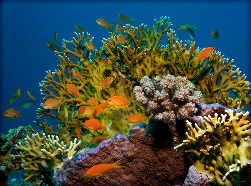 Риф - веселые картинки 4