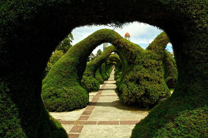 Зелёный тоннель в парке Francisco Alvarado (Коста-Рика)