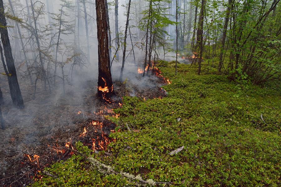 несмотря лес после низового пожара фото входе сайт увидите