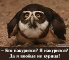 http://img-fotki.yandex.ru/get/9815/18026814.70/0_8617d_1e6c9663_S.png