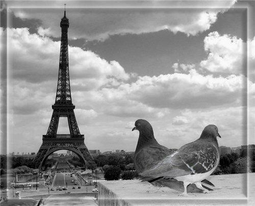 Парижские голуби