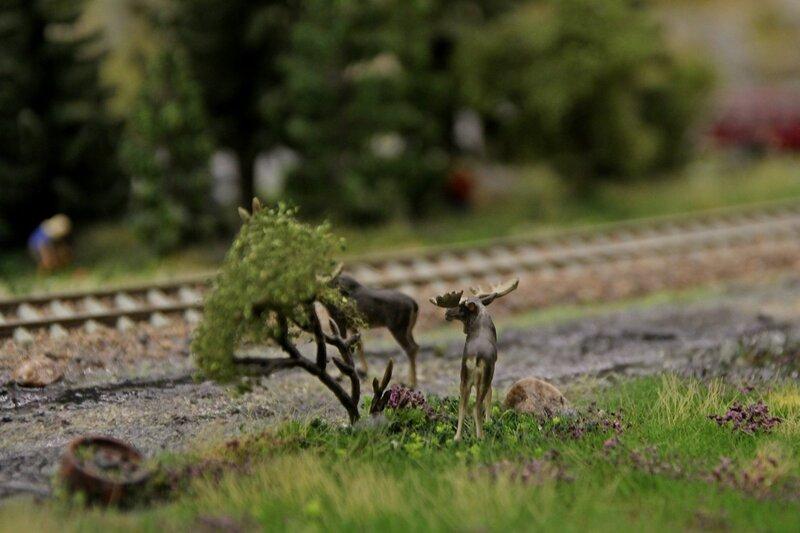 Гранд макет: лоси собираются переходить железнодорожные пути