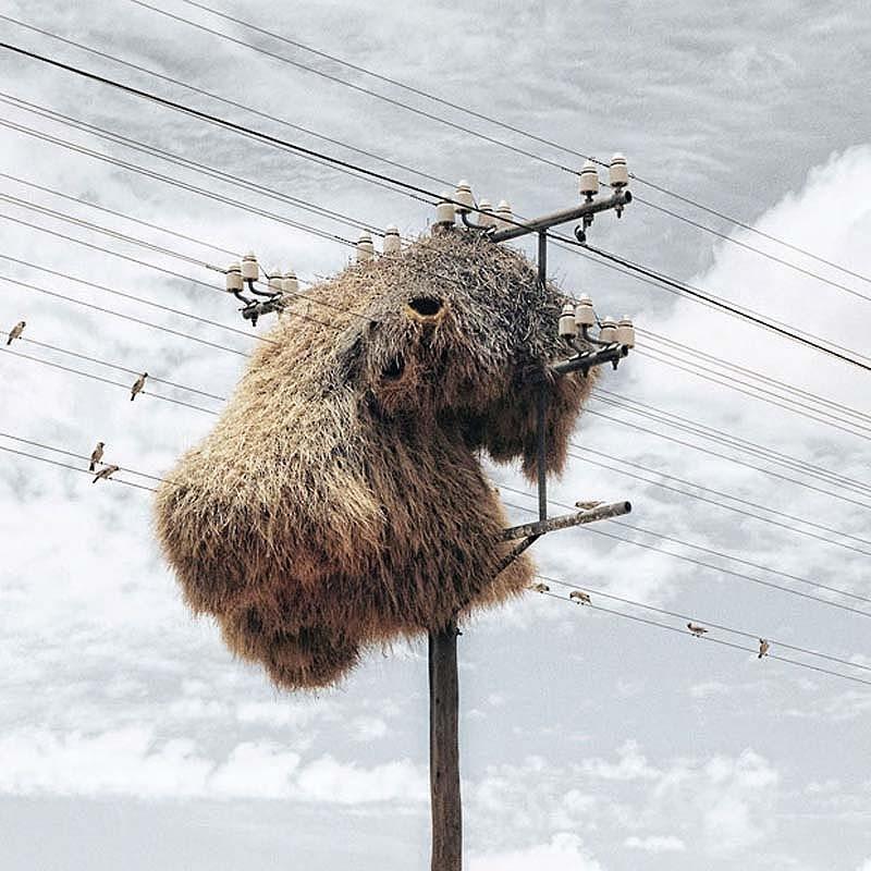 Самые зрелищные по величине гнезда