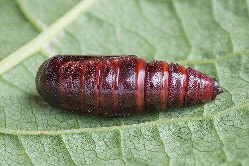 Альбом: Мир под ногами - Яйца личинки куколки насекомых Автор фото: Владимир Брюхов