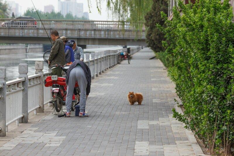Рыбаки, Пекин