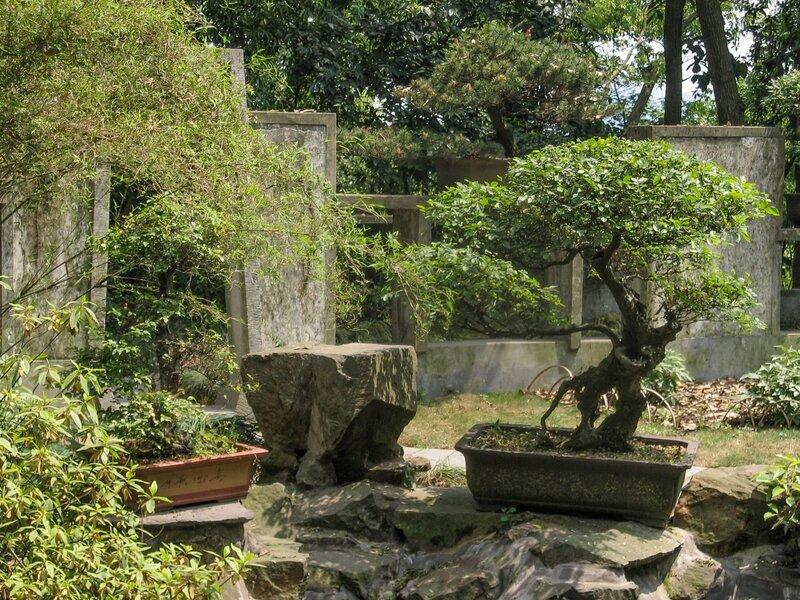 Плошки с деревьями, бонсаи, Люхэта, Ханчжоу