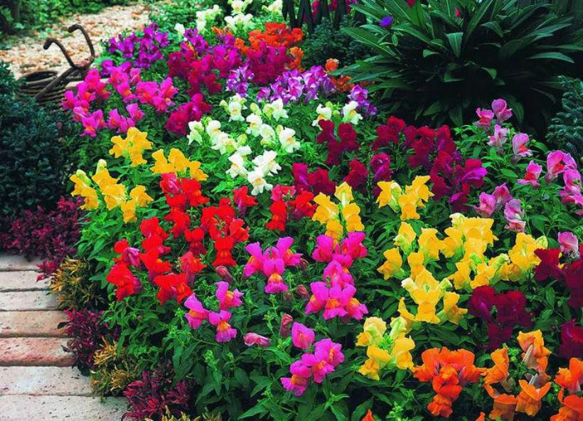 Названия цветов для клумб 32