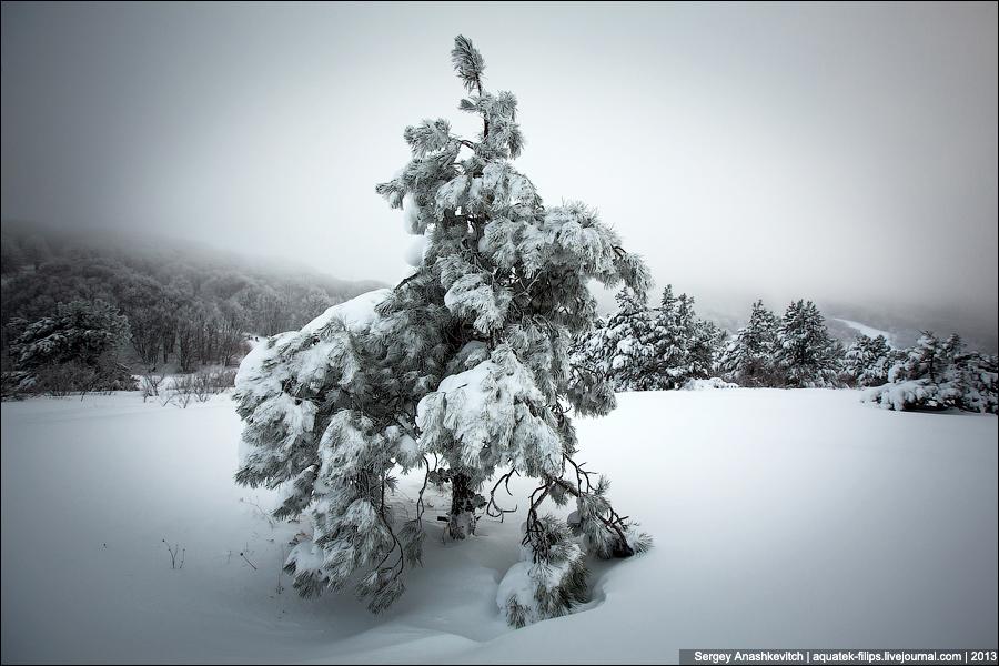 Ай-Петринские елки