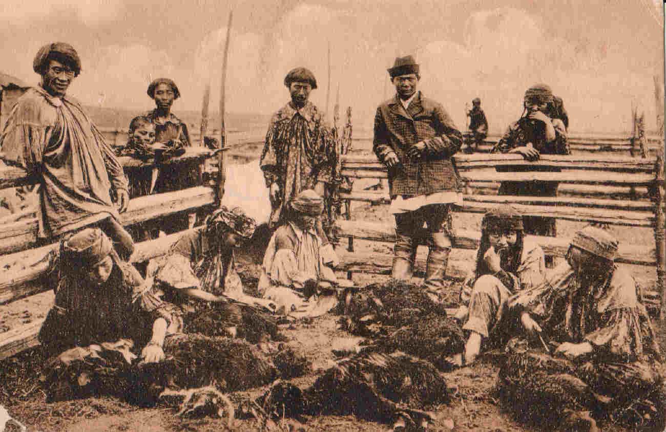 Окрестности города. Минусинские инородцы. Качинцы. Стрижка овец