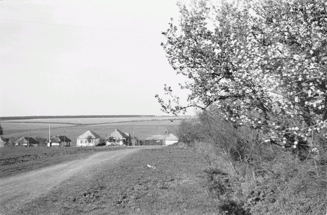 Белгородская область. Цветущий куст возле грунтовой дороге. Невдалеке деревня