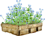 SeedlingInTheGarden_Agnesingap_el (35).png