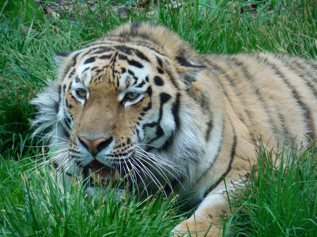 Shkotovo-Safari-park-15.jpg