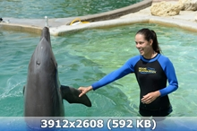 http://img-fotki.yandex.ru/get/9816/247322501.31/0_168cf5_c462c923_orig.jpg