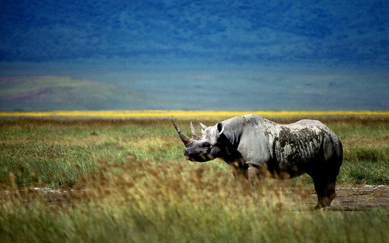 Непостижимая красота дикой природы России. Фотоконкурс National Geographic