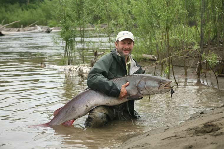 Таймень — большая рыба из рода лососёвых, поэтому её часто называют не иначе как «русский лосось». М