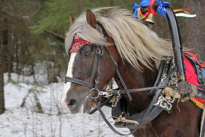 Конь под дугой с колокольцем и ленточками в Порошино
