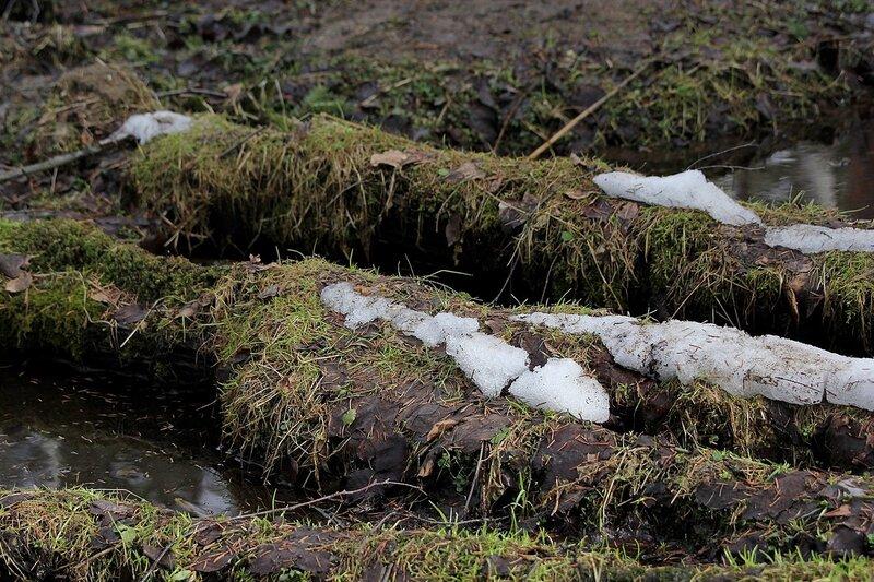 Шапки снега на поваленных в русле ручья заросших травой брёвнах в марте