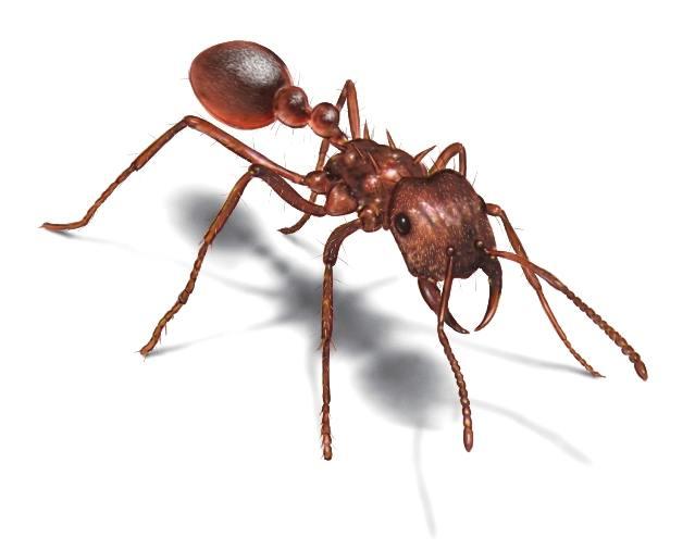 Факты про муравьев