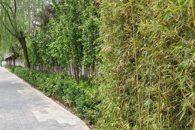 Озеленение узкого участка, Пекин