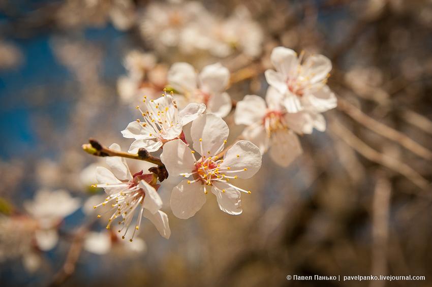 цветы весна волгоград volgograd pavelpanko
