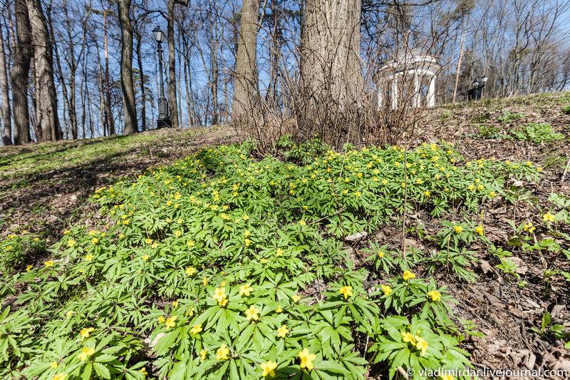 Первые цветы в весеннем Царицыно