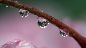 Water droplets macro