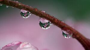 Water droplets macro