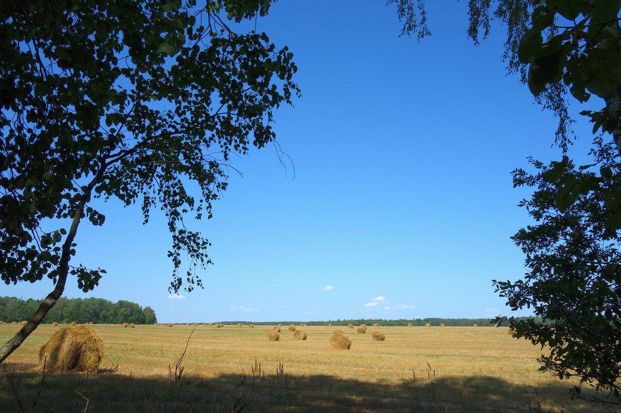 поле и рулоны сена