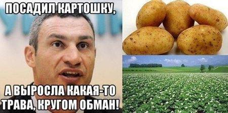 Фото-прикол с Кличко и картошкой