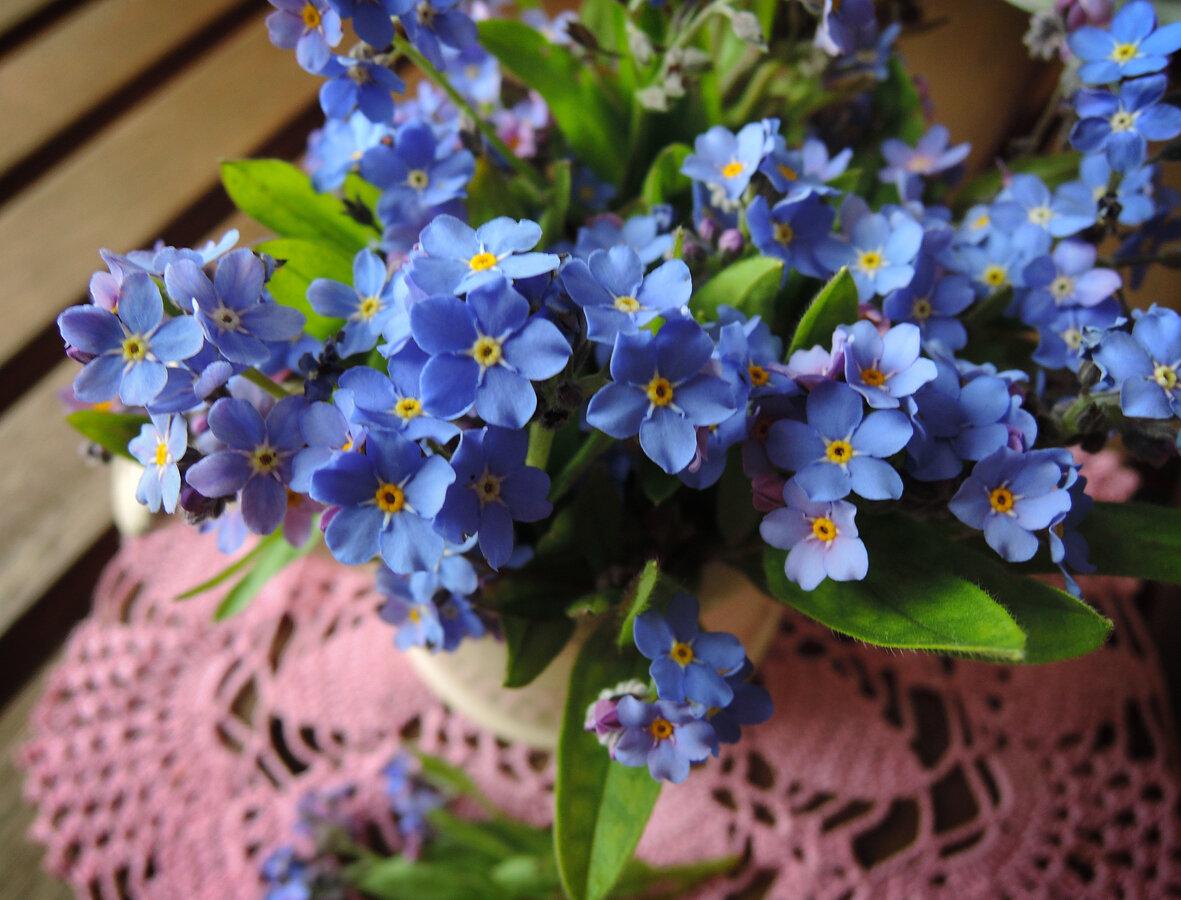 Открытка цветы незабудки