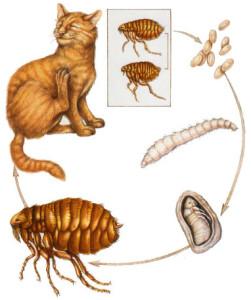 паразиты живущие на теле