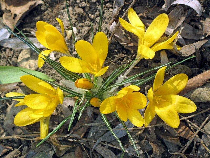 Весенние рассыпушки первоцветов