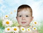 summer_daisies.jpg