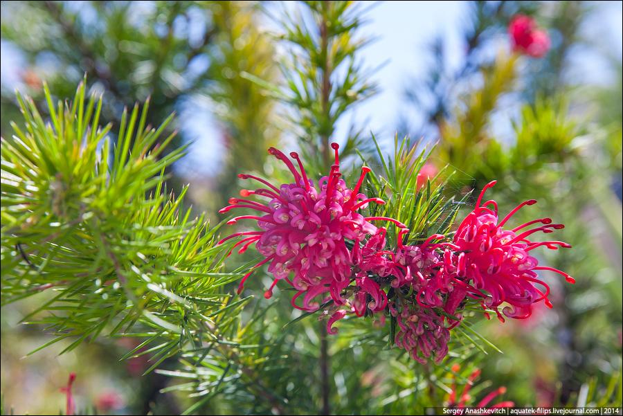 Цветущие елки