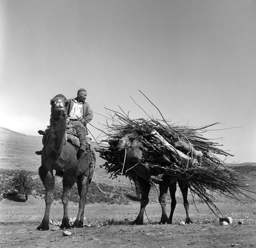 Узбекистан. Сельская местность