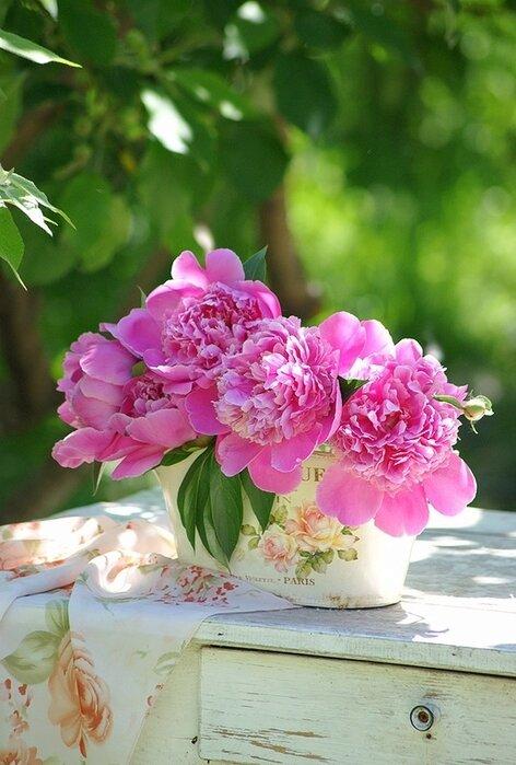 Розовые пионы гифы, открытку своими