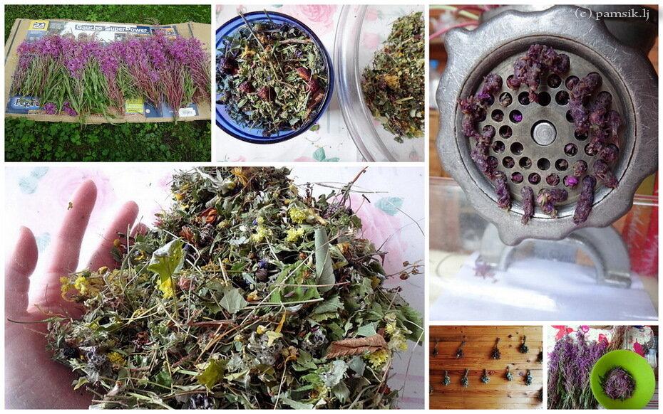 Как сушить иван чай цветы