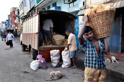В Шри-Ланских автобусах выделили места для «собак в положении»