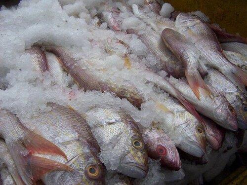 как хранить замороженную рыбу