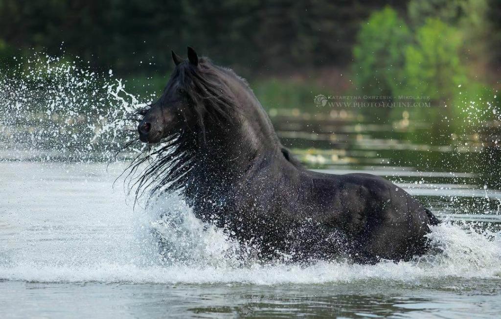fotografij-loshadej-skachushhih-po-volnam-okeana-foto-10.jpg