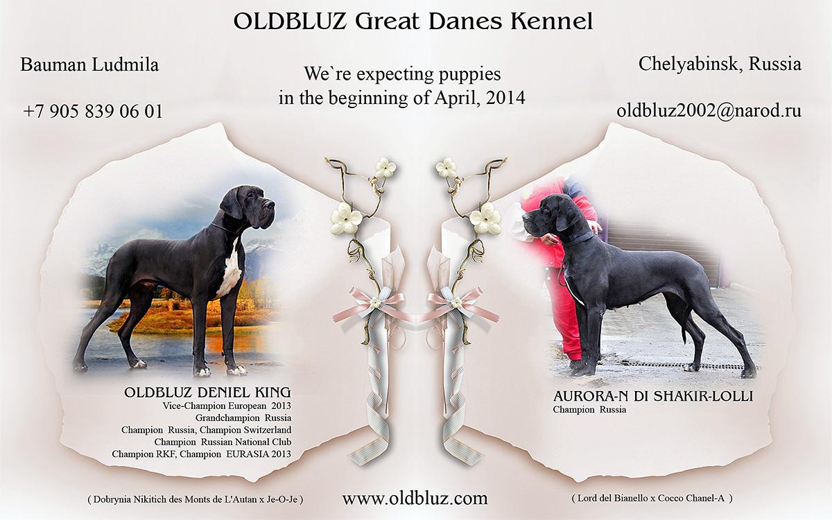 Oldbluz Deniel King x Aurora-N di Shakir-Lolli 0_dd5ac_cf223f10_orig