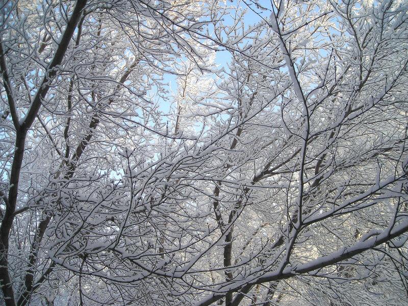 снег1 (9).jpg