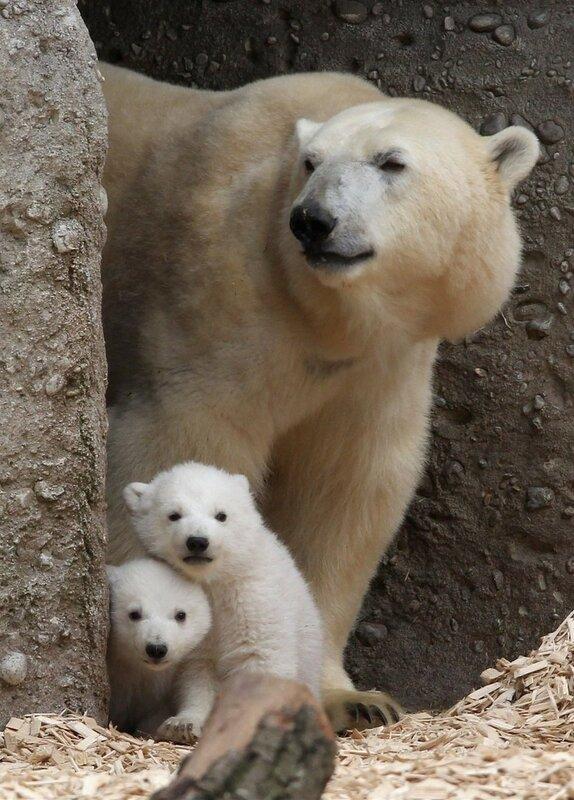 прогулка медведи